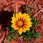 Mulch-flower