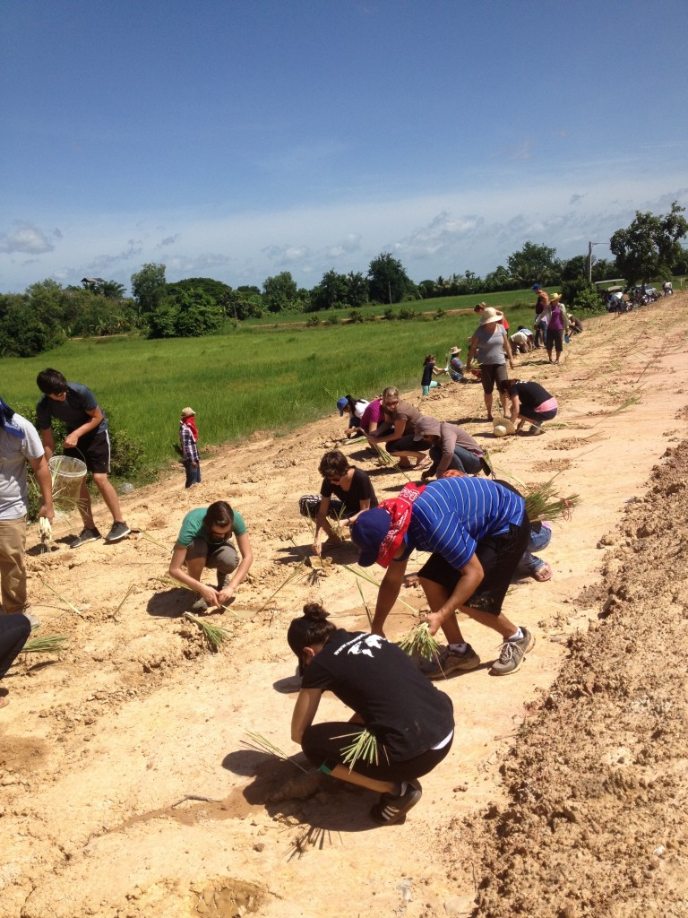 """Our """"party"""" on our future campus, planting lemon grass"""